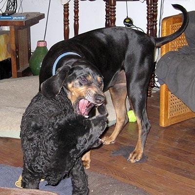 Good dog, Marquessa.