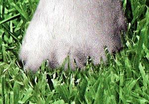 Ahhhhhh! My foot!
