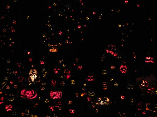 It's hard to get 5,000 pumpkins to say 'cheese'