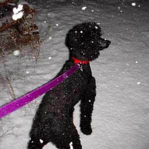 Chere loves snow
