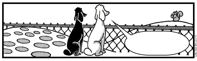 Even for poodles, the grass is always greener on the other side.